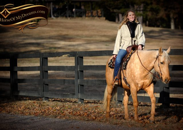 022-Clark-AQHA-Golden-Palomino-For-Sale-Flaxen-Mane