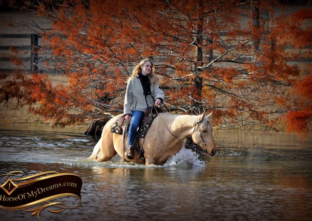 025-Clark-AQHA-Golden-Palomino-For-Sale-Flaxen-Mane