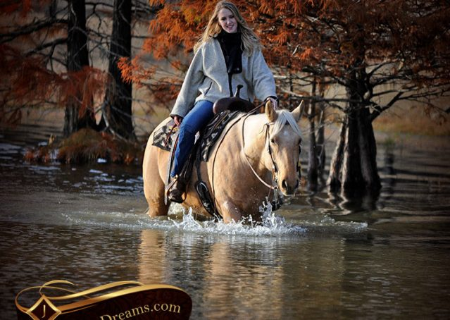 026-Clark-AQHA-Golden-Palomino-For-Sale-Flaxen-Mane
