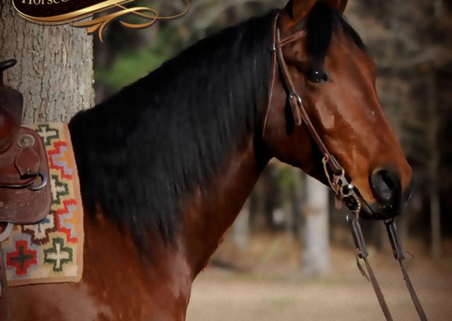 002-Chico-Bay-AQHA-Gelding-For-Sale