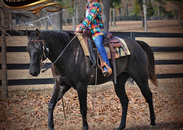 002-Onyx-Black-Quarter-Horse-Gelding-For-Sale
