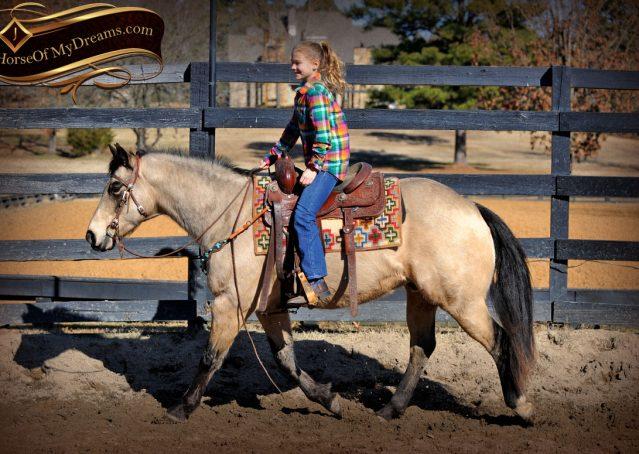002-Timber-Buckskin-Quarter-Horse-Gelding-For-Sale-Trails-Family