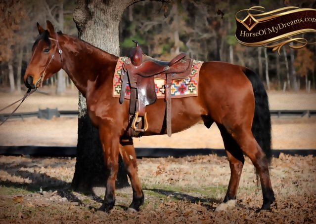 003-Chico-Bay-AQHA-Gelding-For-Sale