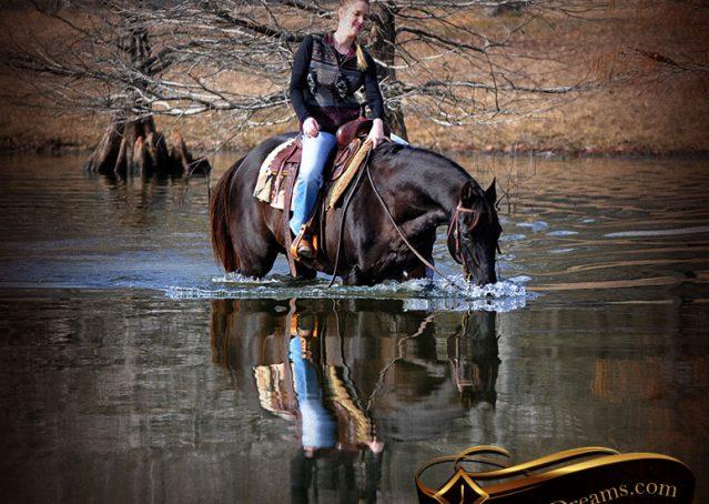 003-Onyx-Black-Quarter-Horse-Gelding-For-Sale