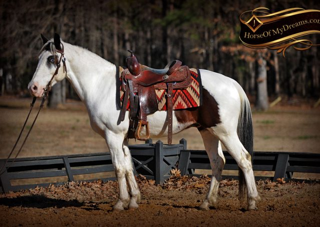 004-Bandit-APHA-Tri-Color-Paint-Gelding-For-Sale