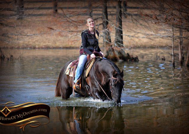 004-Onyx-Black-Quarter-Horse-Gelding-For-Sale