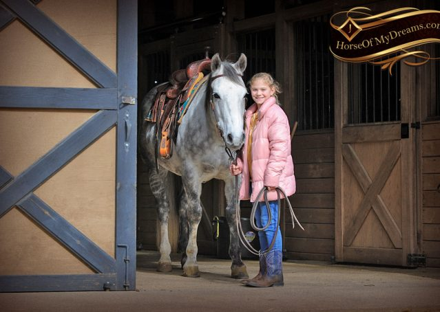 004-Sam-Fancy-Beautiful-Dappled-Gray-Grey-AQHA-Quarter-Horse-Gelding-For-Sale-Trail-Beginner-Family
