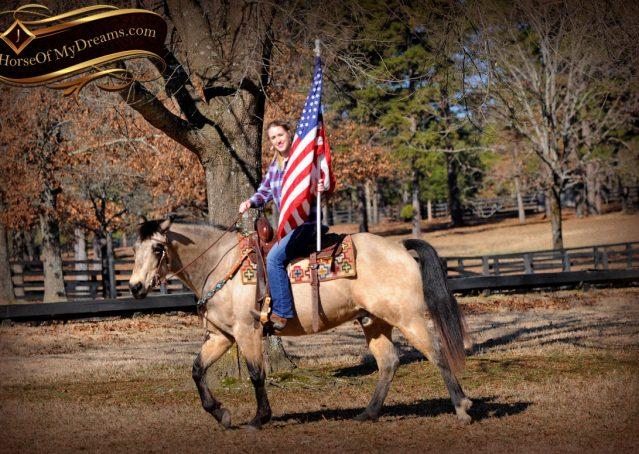 004-Timber-Buckskin-Quarter-Horse-Gelding-For-Sale-Trails-Family