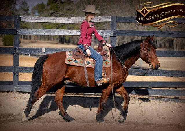 005-Chico-Bay-AQHA-Gelding-For-Sale