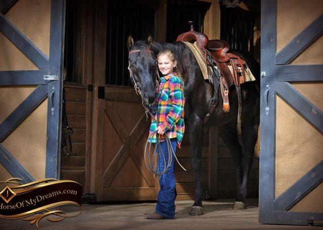 006-Onyx-Black-Quarter-Horse-Gelding-For-Sale