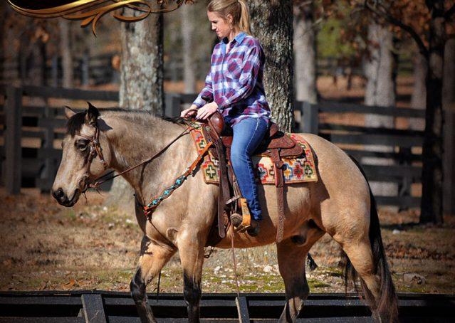 006-Timber-Buckskin-Quarter-Horse-Gelding-For-Sale-Trails-Family