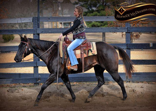 007-Onyx-Black-Quarter-Horse-Gelding-For-Sale