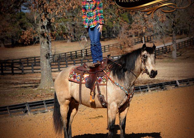 007-Timber-Buckskin-Quarter-Horse-Gelding-For-Sale-Trails-Family