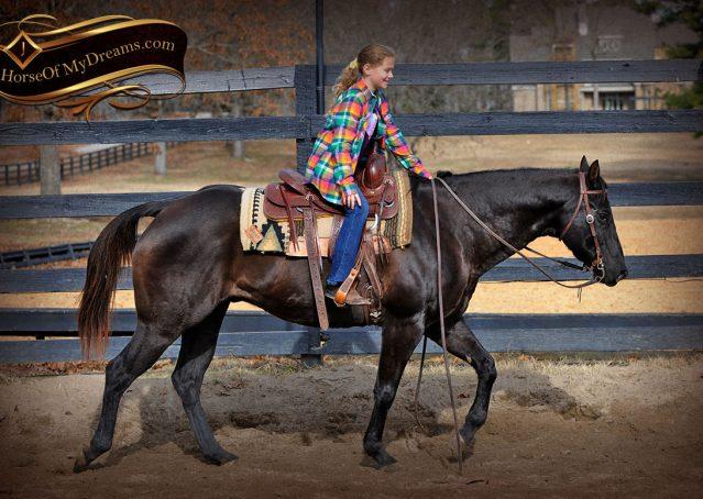 008-Onyx-Black-Quarter-Horse-Gelding-For-Sale