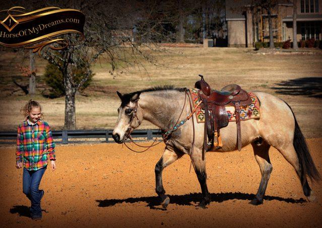 008-Timber-Buckskin-Quarter-Horse-Gelding-For-Sale-Trails-Family