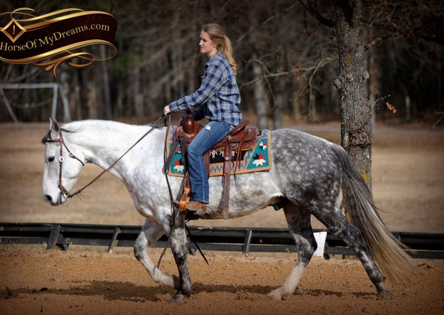 009-Sam-Fancy-Beautiful-Dappled-Gray-Grey-AQHA-Quarter-Horse-Gelding-For-Sale-Trail-Beginner-Family