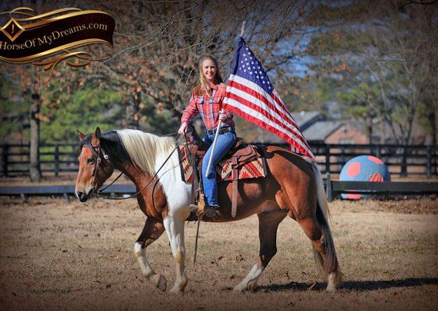 010-Henry-Reno-Paint-Draft-Cross-Gelding-Horse-Beginner-Trail-For-Sale