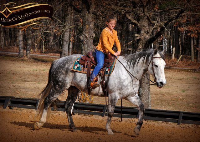 010-Sam-Fancy-Beautiful-Dappled-Gray-Grey-AQHA-Quarter-Horse-Gelding-For-Sale-Trail-Beginner-Family