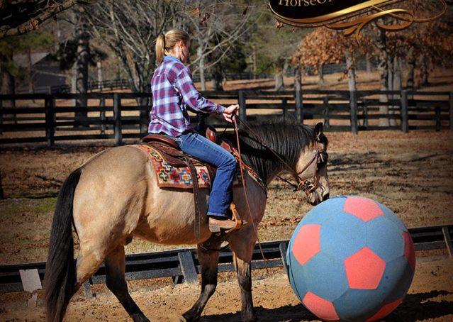 010-Timber-Buckskin-Quarter-Horse-Gelding-For-Sale-Trails-Family