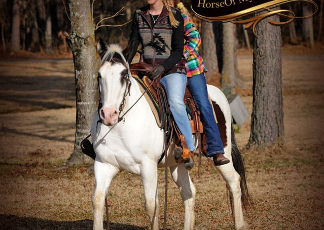 011-Bandit-APHA-Tri-Color-Paint-Gelding-For-Sale