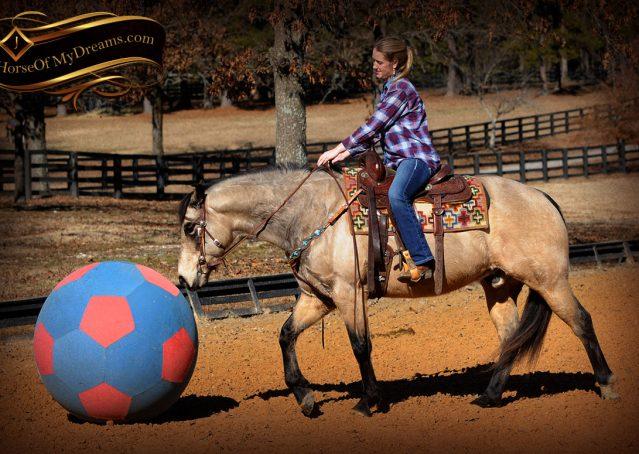 011-Timber-Buckskin-Quarter-Horse-Gelding-For-Sale-Trails-Family