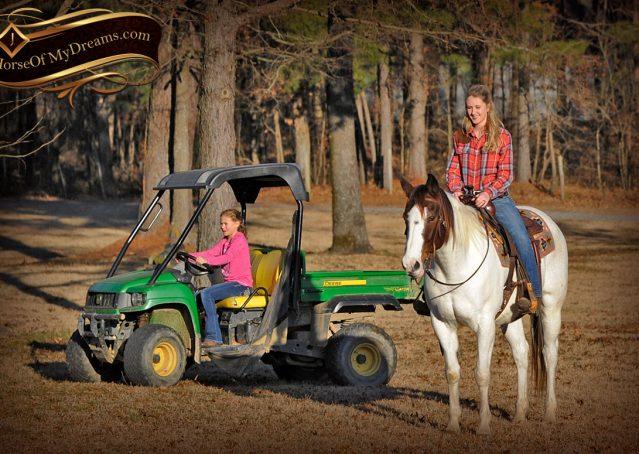 012-Jose-Tri-Color-APHA-Gelding-For-Sale-Kids-Trail-Family-Beginner