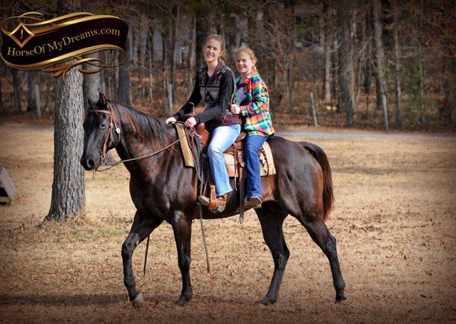 012-Onyx-Black-Quarter-Horse-Gelding-For-Sale