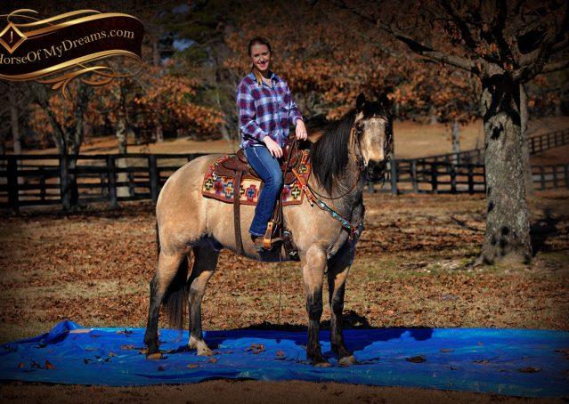 012-Timber-Buckskin-Quarter-Horse-Gelding-For-Sale-Trails-Family
