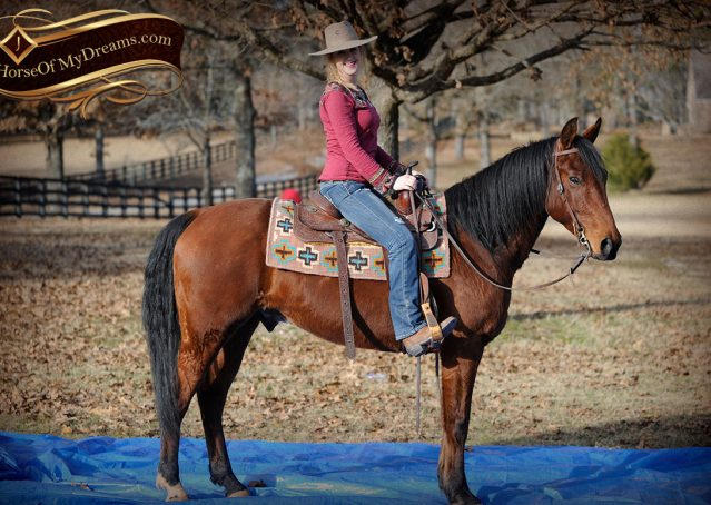 013-Chico-Bay-AQHA-Gelding-For-Sale