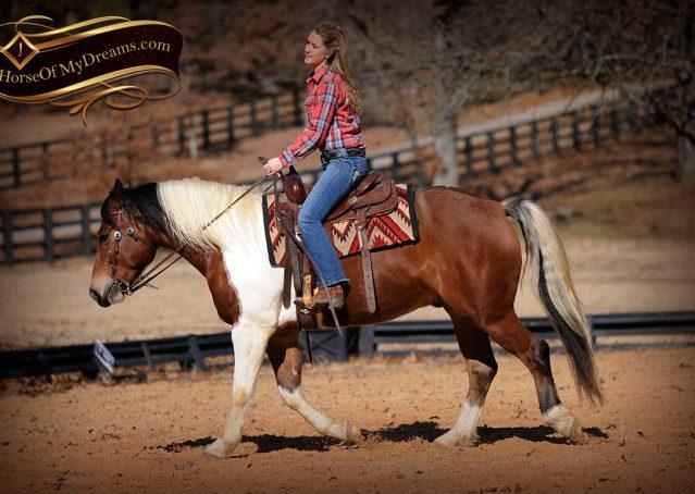 013-Henry-Reno-Paint-Draft-Cross-Gelding-Horse-Beginner-Trail-For-Sale