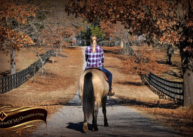 013-Timber-Buckskin-Quarter-Horse-Gelding-For-Sale-Trails-Family