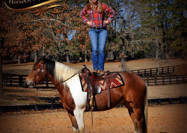 014-Henry-Reno-Paint-Draft-Cross-Gelding-Horse-Beginner-Trail-For-Sale