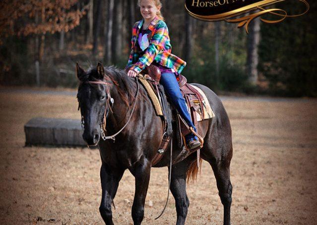 014-Onyx-Black-Quarter-Horse-Gelding-For-Sale