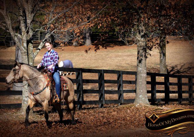 014-Timber-Buckskin-Quarter-Horse-Gelding-For-Sale-Trails-Family