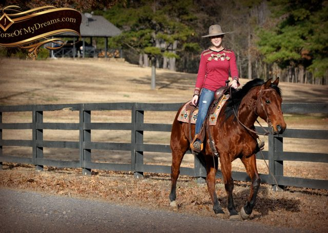 015-Chico-Bay-AQHA-Gelding-For-Sale