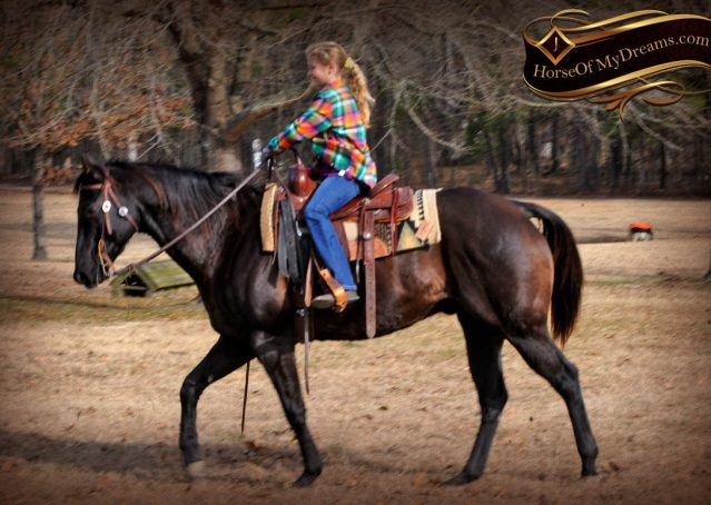 015-Onyx-Black-Quarter-Horse-Gelding-For-Sale