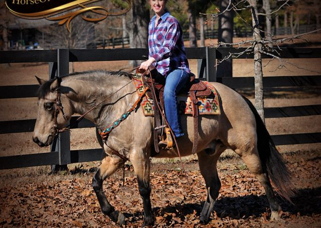 015-Timber-Buckskin-Quarter-Horse-Gelding-For-Sale-Trails-Family