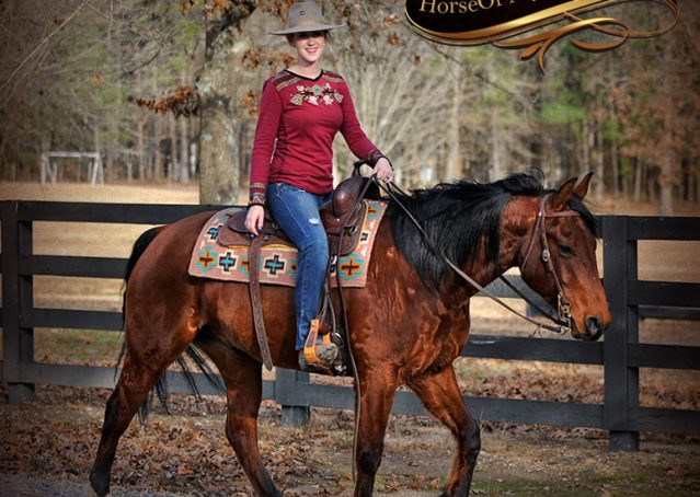 016-Chico-Bay-AQHA-Gelding-For-Sale