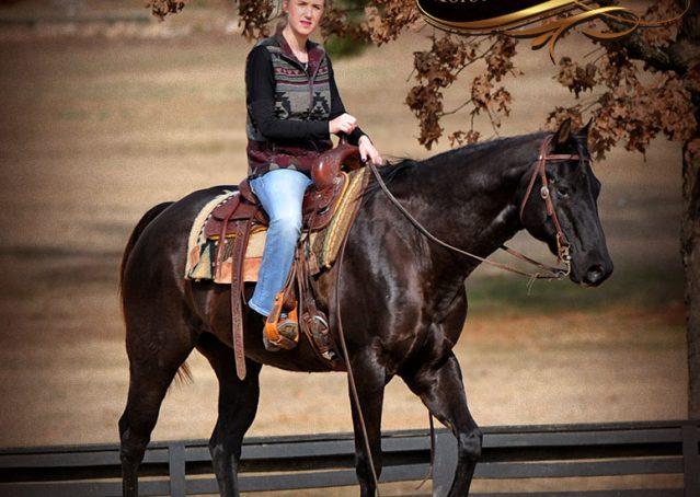 016-Onyx-Black-Quarter-Horse-Gelding-For-Sale