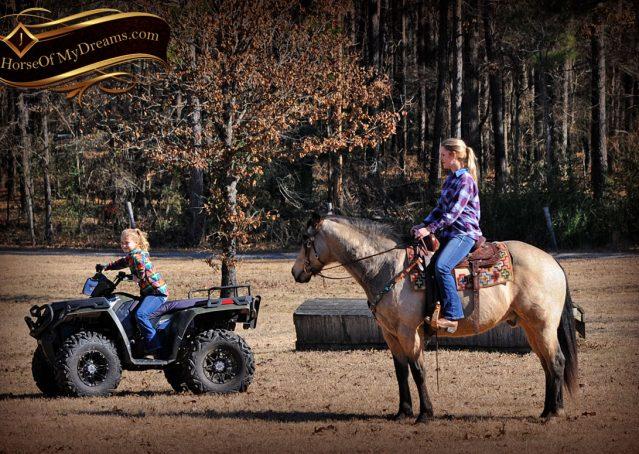 016-Timber-Buckskin-Quarter-Horse-Gelding-For-Sale-Trails-Family