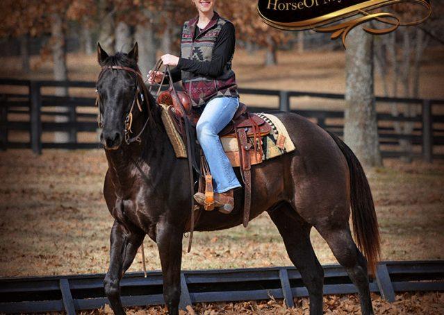 017-Onyx-Black-Quarter-Horse-Gelding-For-Sale