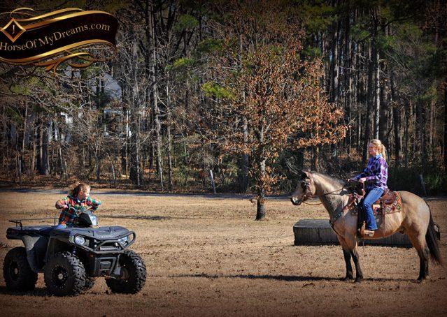 017-Timber-Buckskin-Quarter-Horse-Gelding-For-Sale-Trails-Family