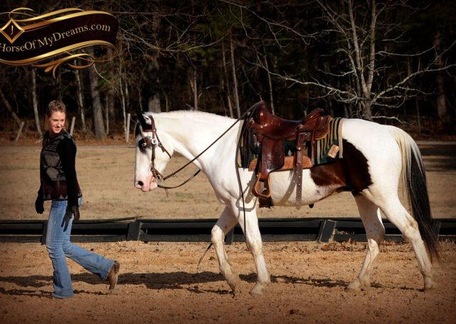 018-Bandit-APHA-Tri-Color-Paint-Gelding-For-Sale