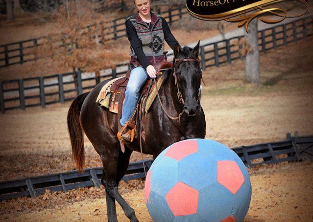 018-Onyx-Black-Quarter-Horse-Gelding-For-Sale