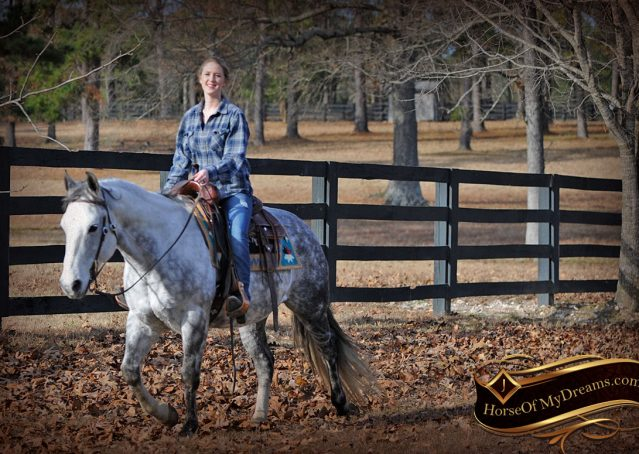 018-Sam-Fancy-Beautiful-Dappled-Gray-Grey-AQHA-Quarter-Horse-Gelding-For-Sale-Trail-Beginner-Family