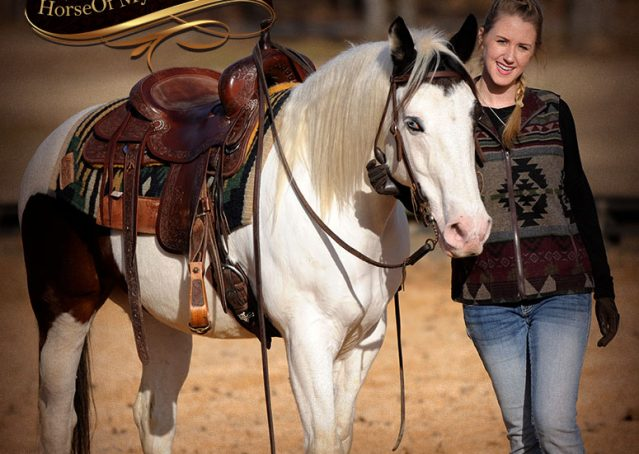 019-Bandit-APHA-Tri-Color-Paint-Gelding-For-Sale