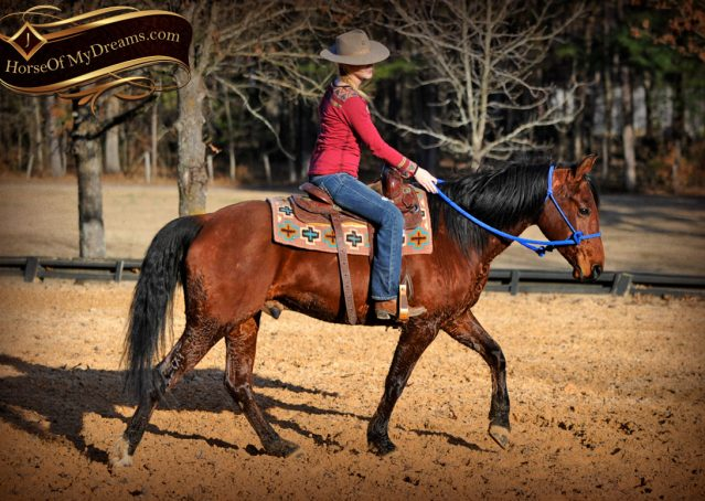 019-Chico-Bay-AQHA-Gelding-For-Sale