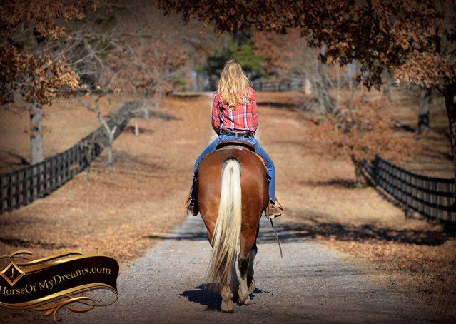 019-Henry-Reno-Paint-Draft-Cross-Gelding-Horse-Beginner-Trail-For-Sale
