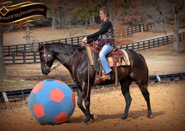 019-Onyx-Black-Quarter-Horse-Gelding-For-Sale