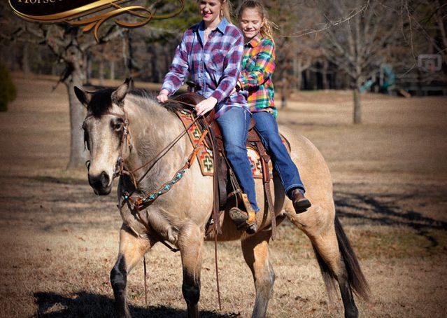 019-Timber-Buckskin-Quarter-Horse-Gelding-For-Sale-Trails-Family